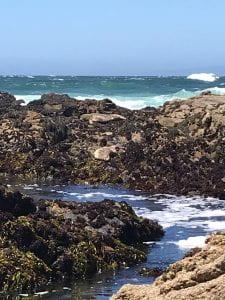 Rocky Ocean with harbor seals sunbathing