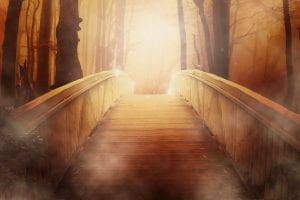 Fantasy bridge leading into a fantasy forest